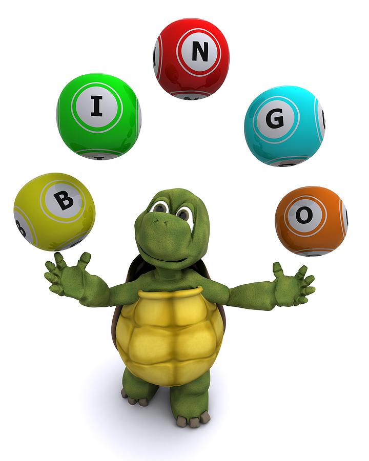 bingo turtle01 Sällskapsbingo